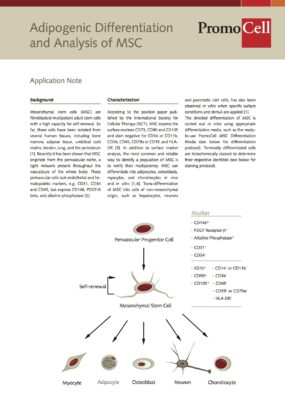 Adipogenic Differentiation and Analysis of MSC