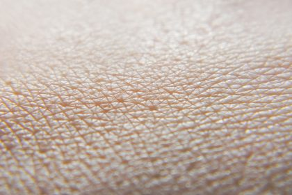 Mimicking the Body's Largest Organ In Vitro with 3D Skin Models
