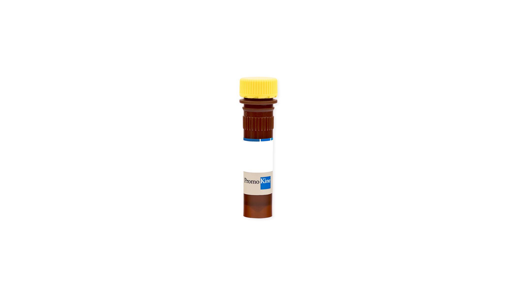 AFC (7-amino-4- trifluoromethyl-coumarin)