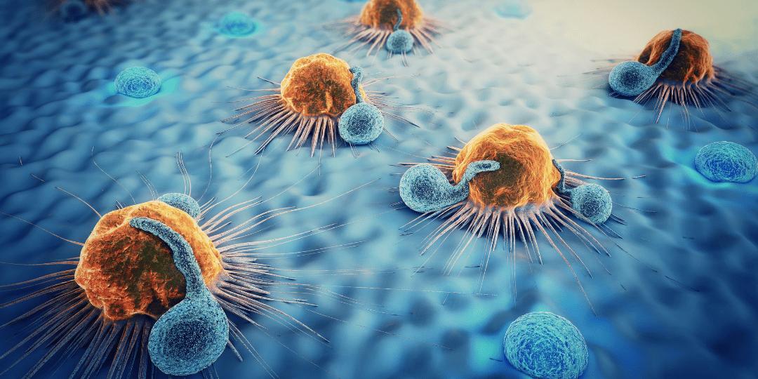 Cancer cells, lymphocytes, dendritic cells